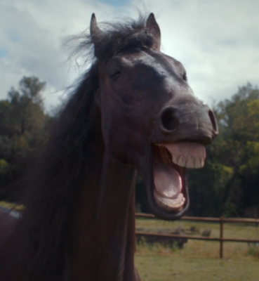 VW – Laughing Horses